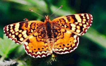 Animal - Butterfly Wallpapers and Backgrounds ID : 405355