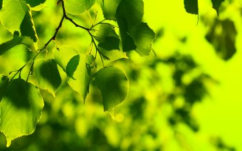 Earth - Leaf Wallpapers and Backgrounds ID : 405729
