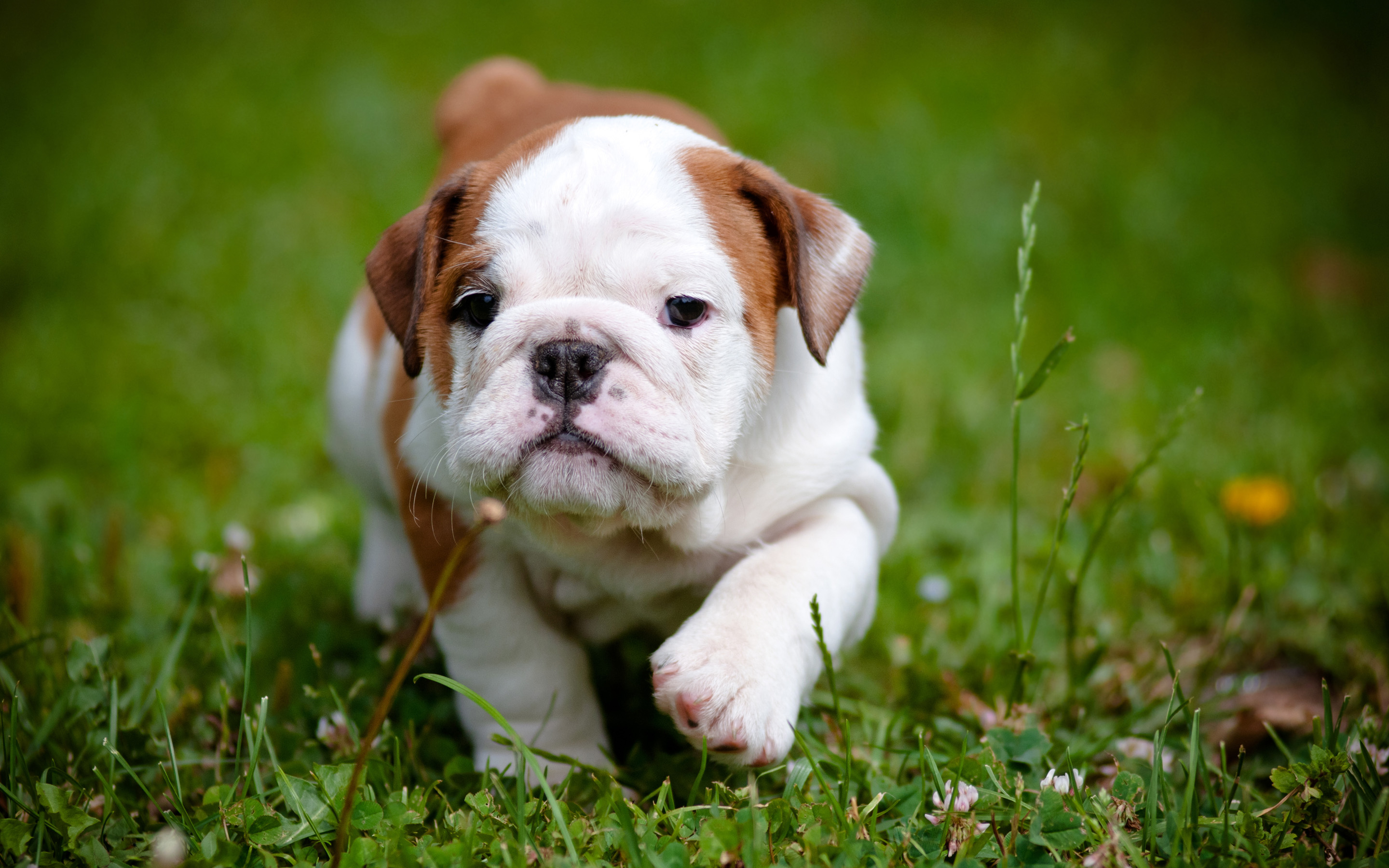 dog full hd wallpaper and background | 2880x1800 | id:406863