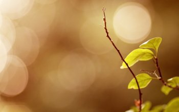 Earth - Leaf Wallpapers and Backgrounds ID : 406885