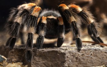 Animalia - Spider Wallpapers and Backgrounds ID : 406903