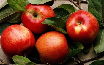 Alimento - Apple Wallpapers and Backgrounds ID : 406908