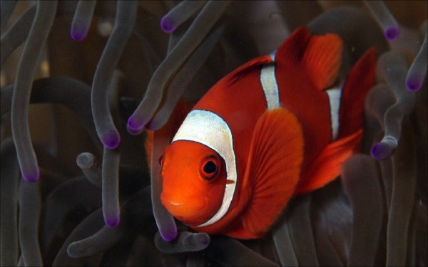 Animal - fish Wallpapers and Backgrounds