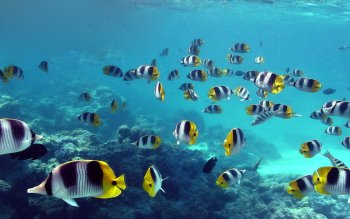 Animal - Fish Wallpapers and Backgrounds ID : 408394