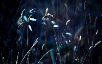 Earth - Grass Wallpapers and Backgrounds ID : 409971