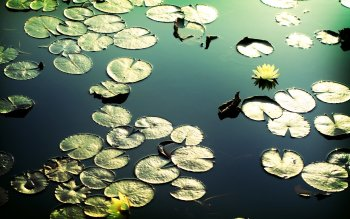 Earth - Lotus Wallpapers and Backgrounds ID : 409990
