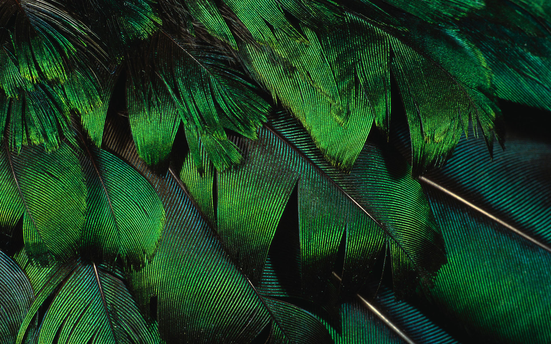 wallpaper feather download - photo #21