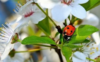 Animal - Ladybug Wallpapers and Backgrounds ID : 410218