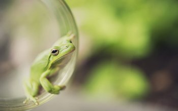 Animal - Frog Wallpapers and Backgrounds ID : 410480