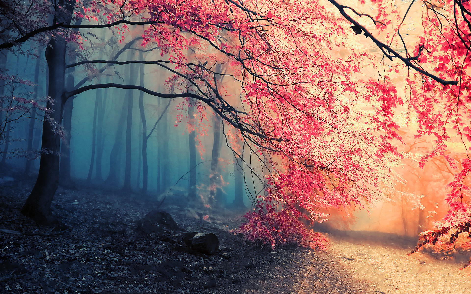 1751 forest hd wallpapers backgrounds wallpaper abyss - Decorative trees with red leaves amazing contrasts ...