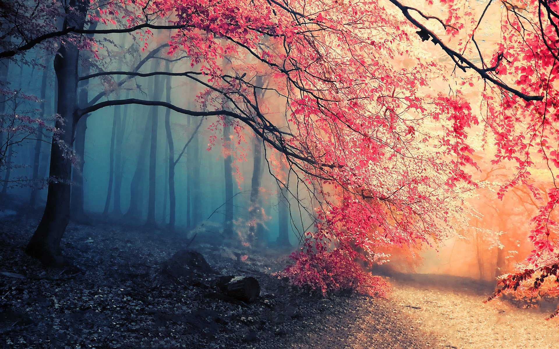 autumn full hd wallpaper and background image | 1920x1200 | id:411820