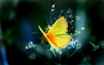 Animal - Butterfly Wallpapers and Backgrounds ID : 411528