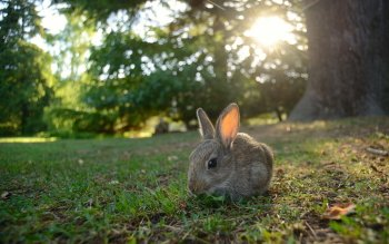 Animal - Rabbit Wallpapers and Backgrounds ID : 412130