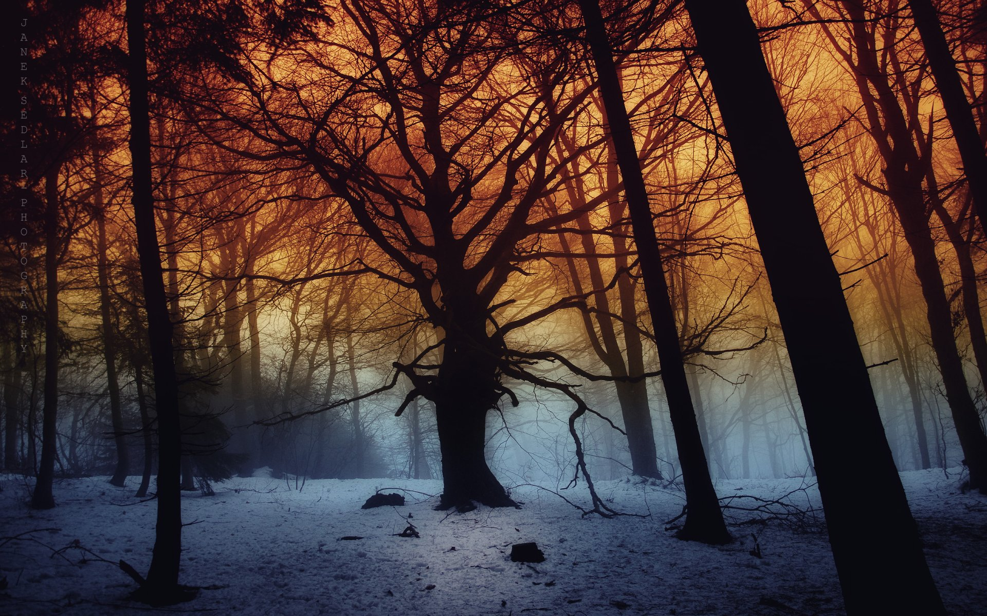 Earth - Forest  Snow Winter Tree Wallpaper