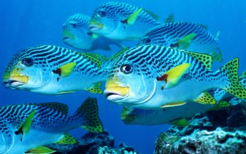 Animal - Fish Wallpapers and Backgrounds ID : 413705