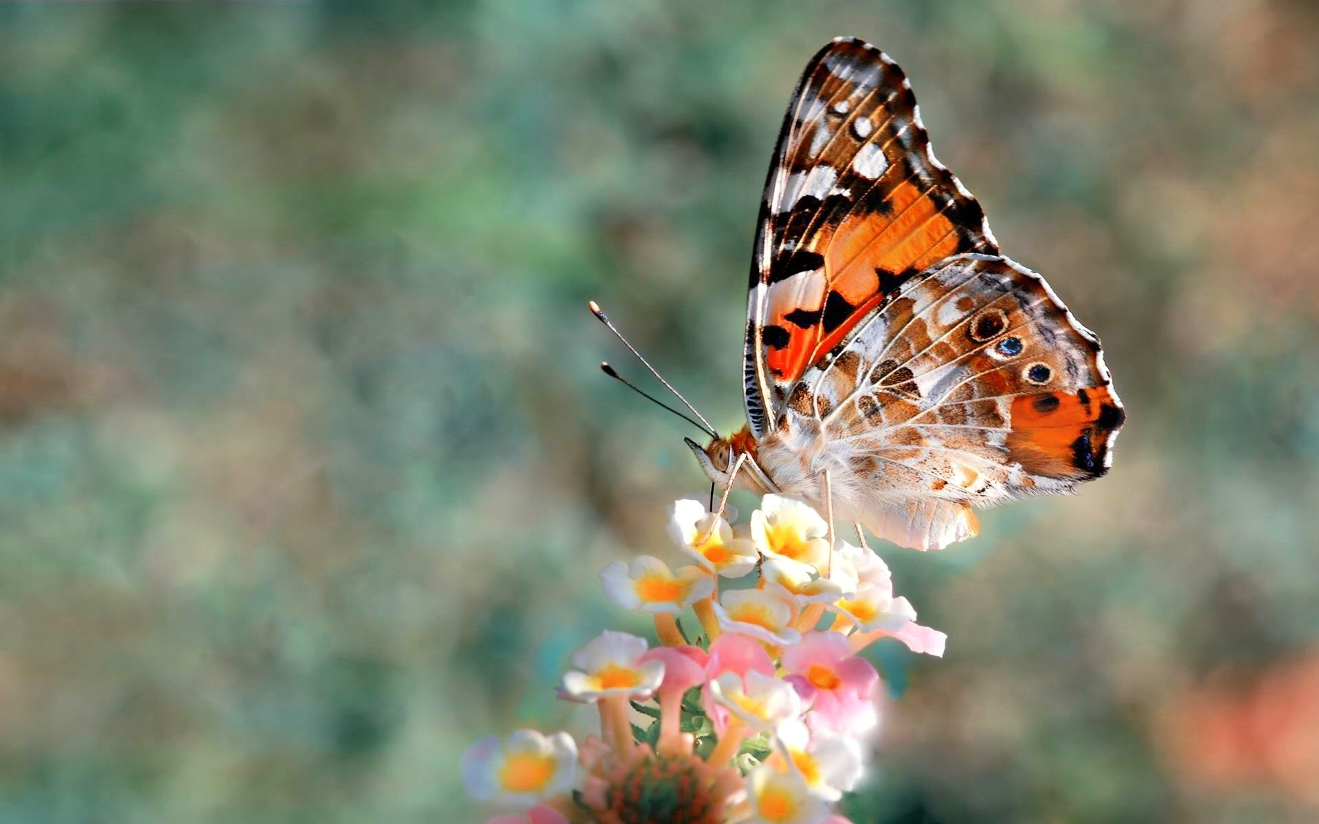 Animal - Butterfly  Colors Animal Colorful Spring Wallpaper