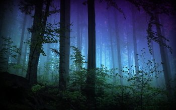 Earth - Forest Wallpapers and Backgrounds ID : 415002