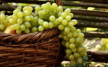 Alimento - Grapes Wallpapers and Backgrounds ID : 415023