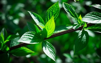 Earth - Leaf Wallpapers and Backgrounds ID : 415283