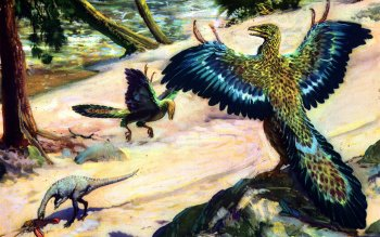 Animal - Archaeopteryx Wallpapers and Backgrounds ID : 415938