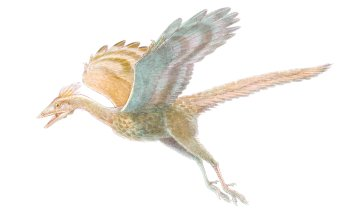 Animalia - Archaeopteryx Wallpapers and Backgrounds ID : 415941