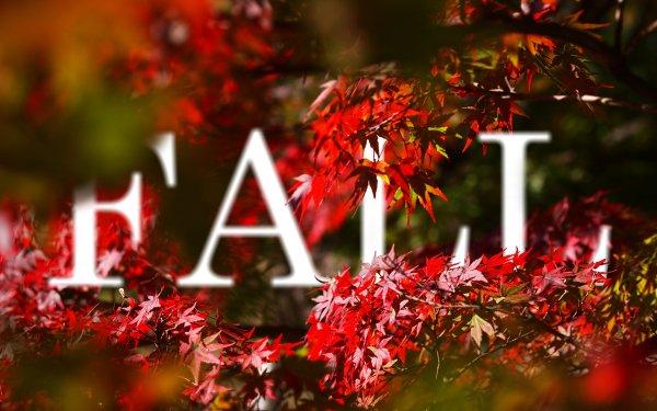 Photography Manipulation Fall Season Earth Leaf Vector HD Wallpaper | Background Image