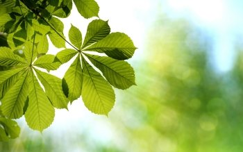 Earth - Leaf Wallpapers and Backgrounds ID : 416260