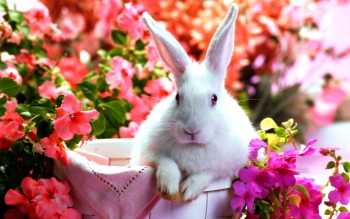 Animal - Rabbit Wallpapers and Backgrounds ID : 416346