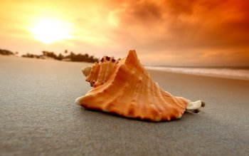 Earth - Shell Wallpapers and Backgrounds ID : 416356