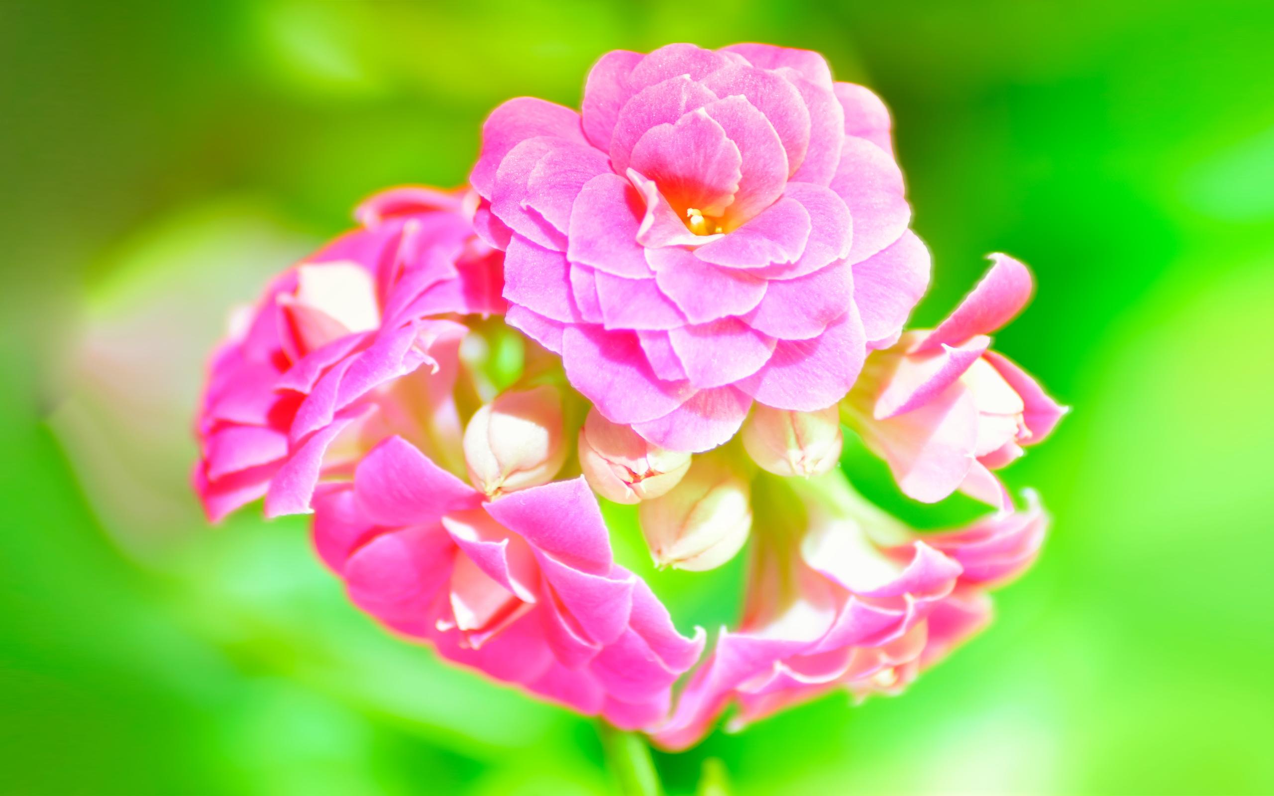 цветы, разноцветие, зелень бесплатно