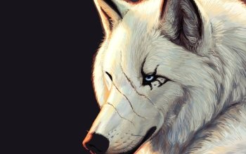 Djur - Wolf Wallpapers and Backgrounds ID : 418943