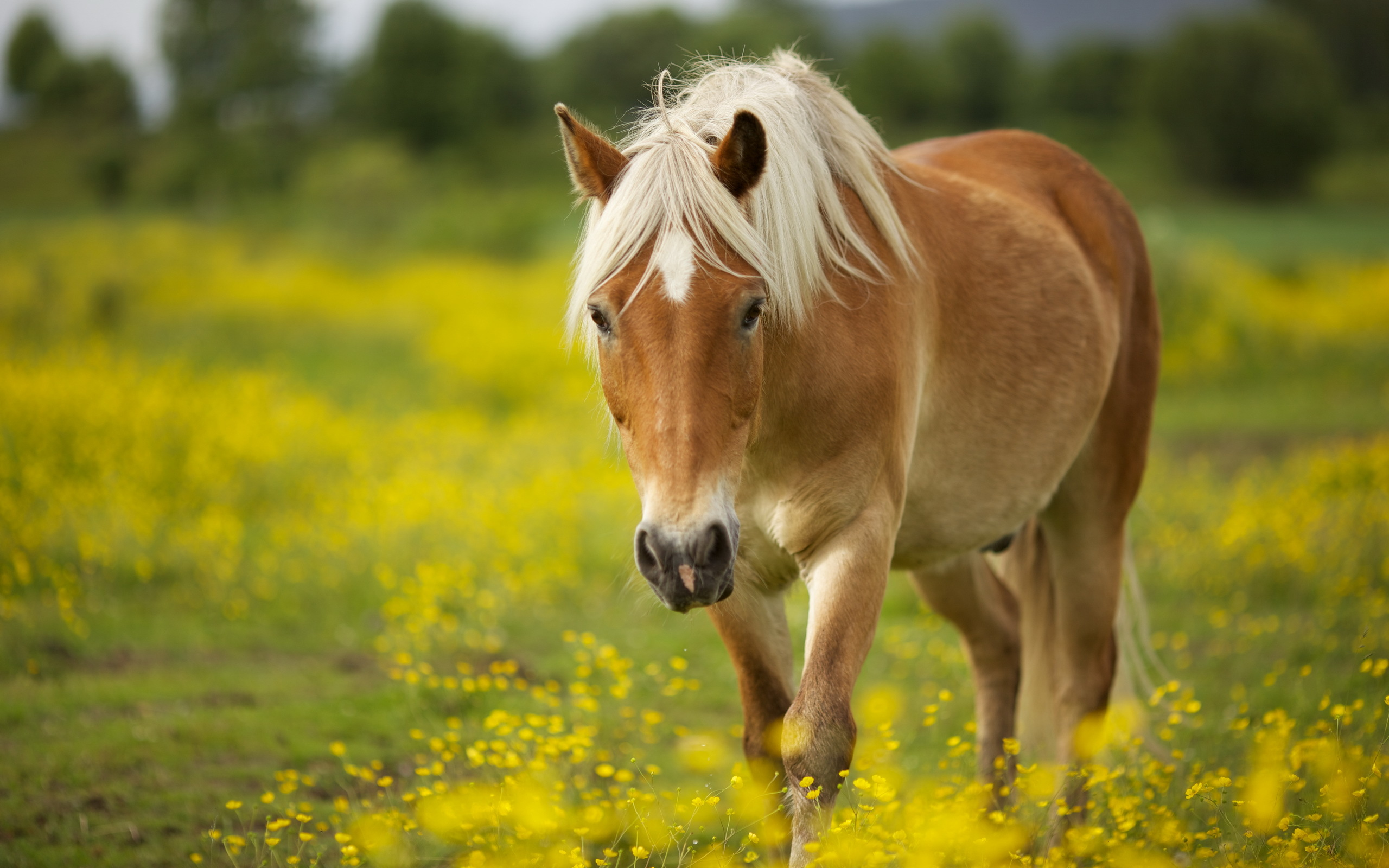horse full hd wallpaper and background image | 2560x1600 | id:420090