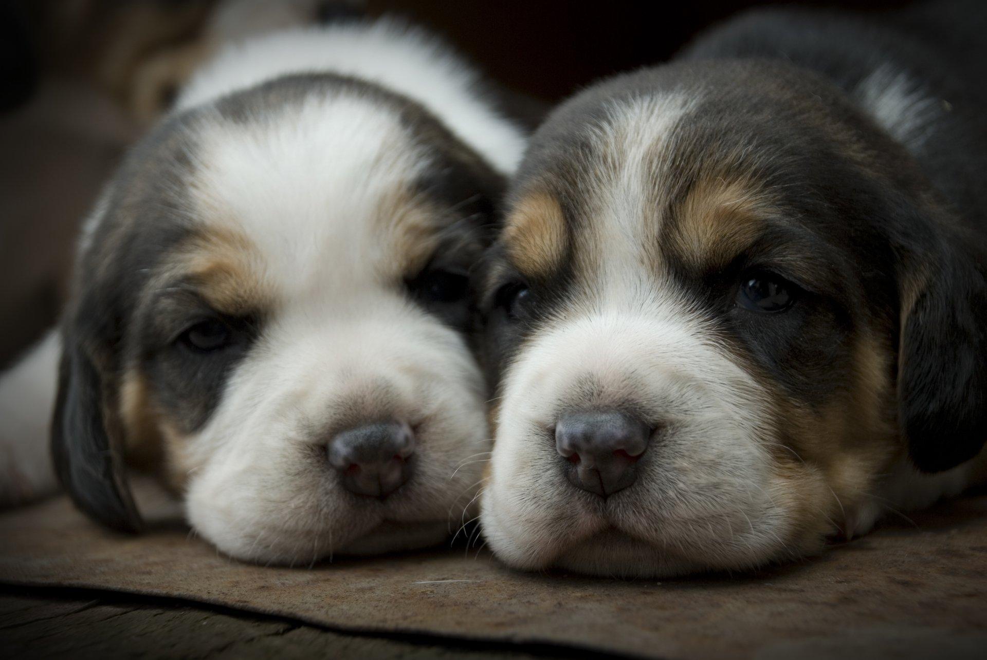iphone puppy