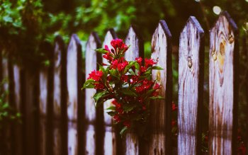Man Made - Fence Wallpapers and Backgrounds ID : 421393