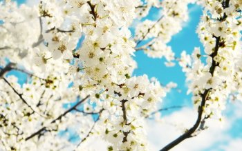 Earth - Spring Wallpapers and Backgrounds ID : 422037