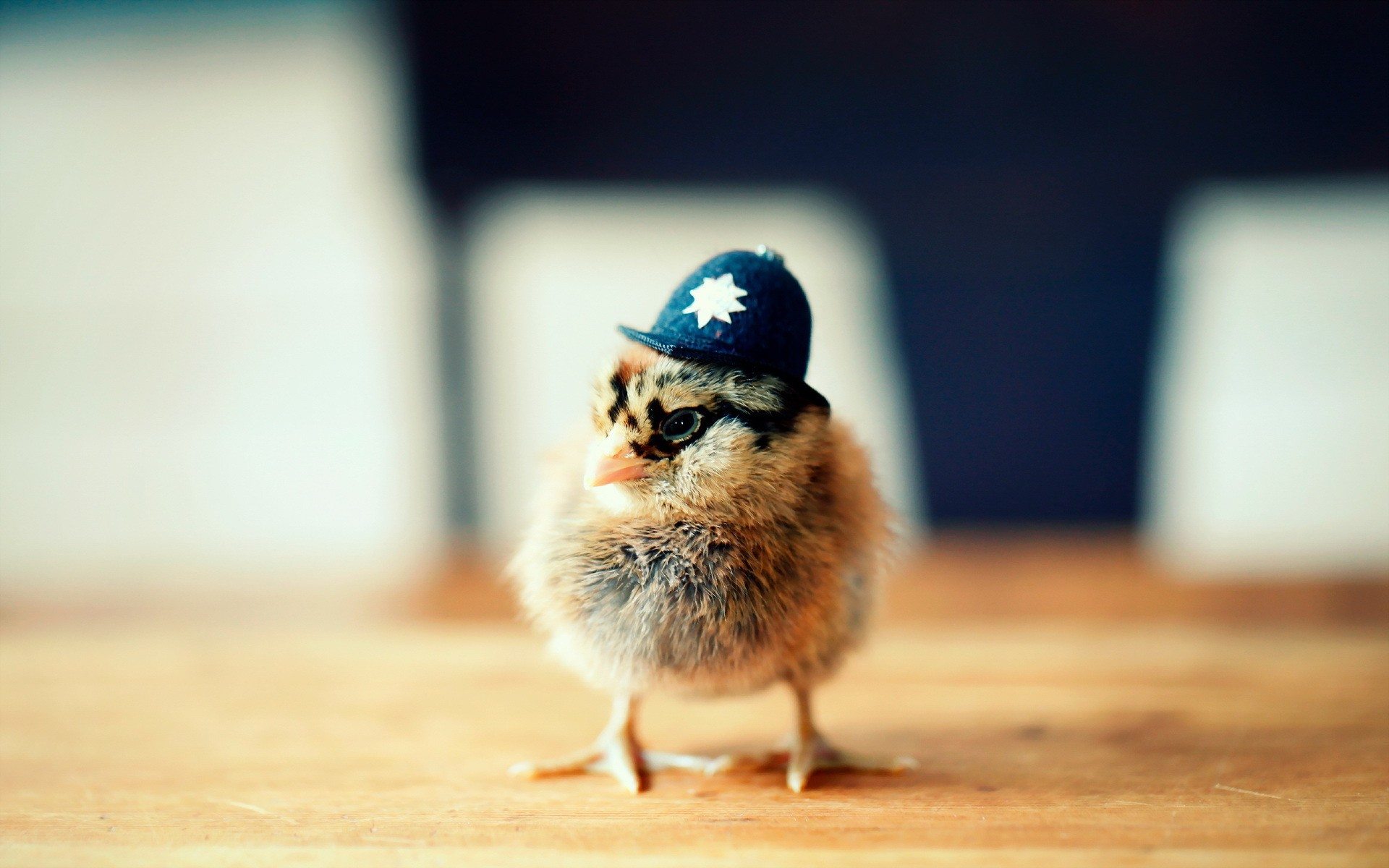 Funny Chicken Police: Police Chick HD Wallpaper