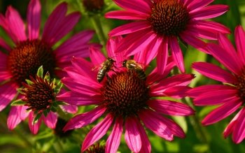 Animal - Bee Wallpapers and Backgrounds ID : 424298