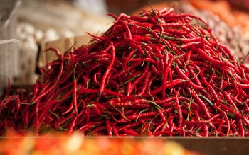 Alimento - Pepper Wallpapers and Backgrounds ID : 425261