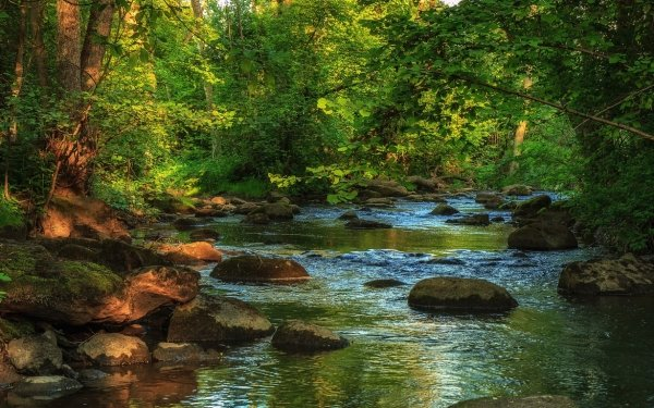 Earth River Creek Forest HD Wallpaper | Background Image
