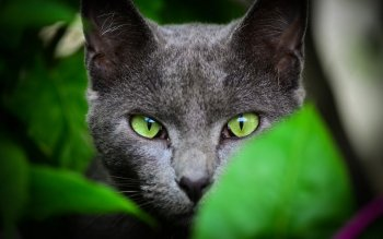 Animal - Cat Wallpapers and Backgrounds ID : 427289