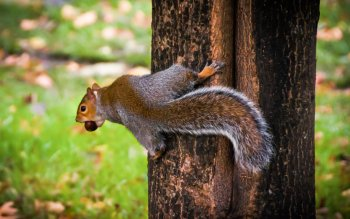 Animal - Squirrel Wallpapers and Backgrounds ID : 427801