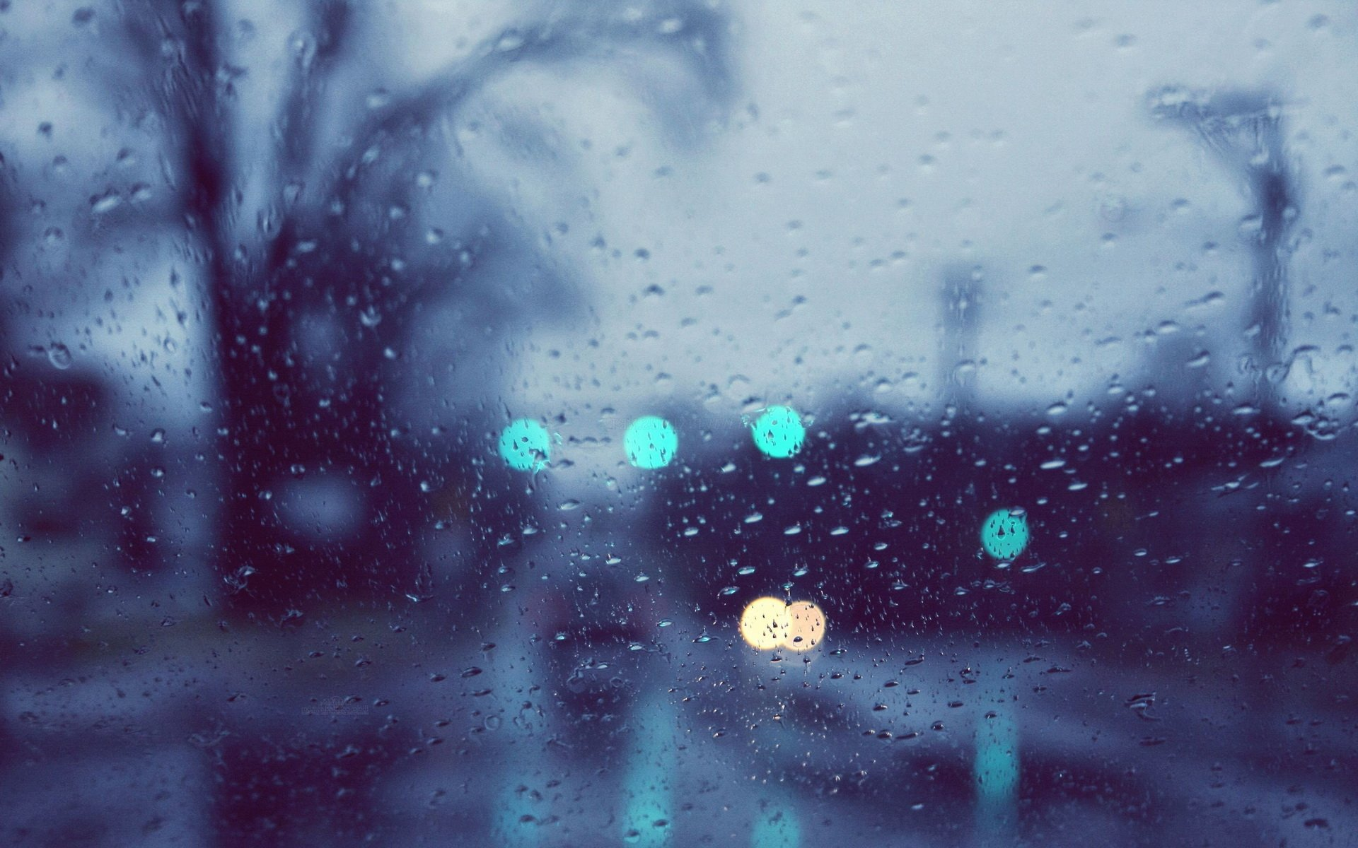 Photography - Raindrops  Wallpaper