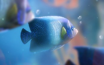 Animal - Fish Wallpapers and Backgrounds ID : 429309