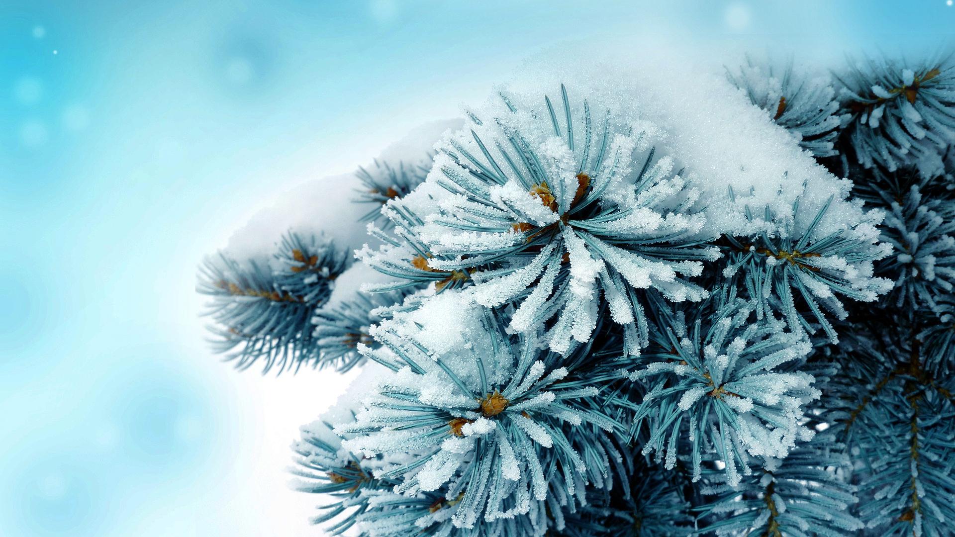 Pine tree full hd wallpaper and background image for Sfondi invernali hd