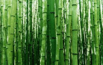 Tierra - Bamboo Wallpapers and Backgrounds ID : 430029