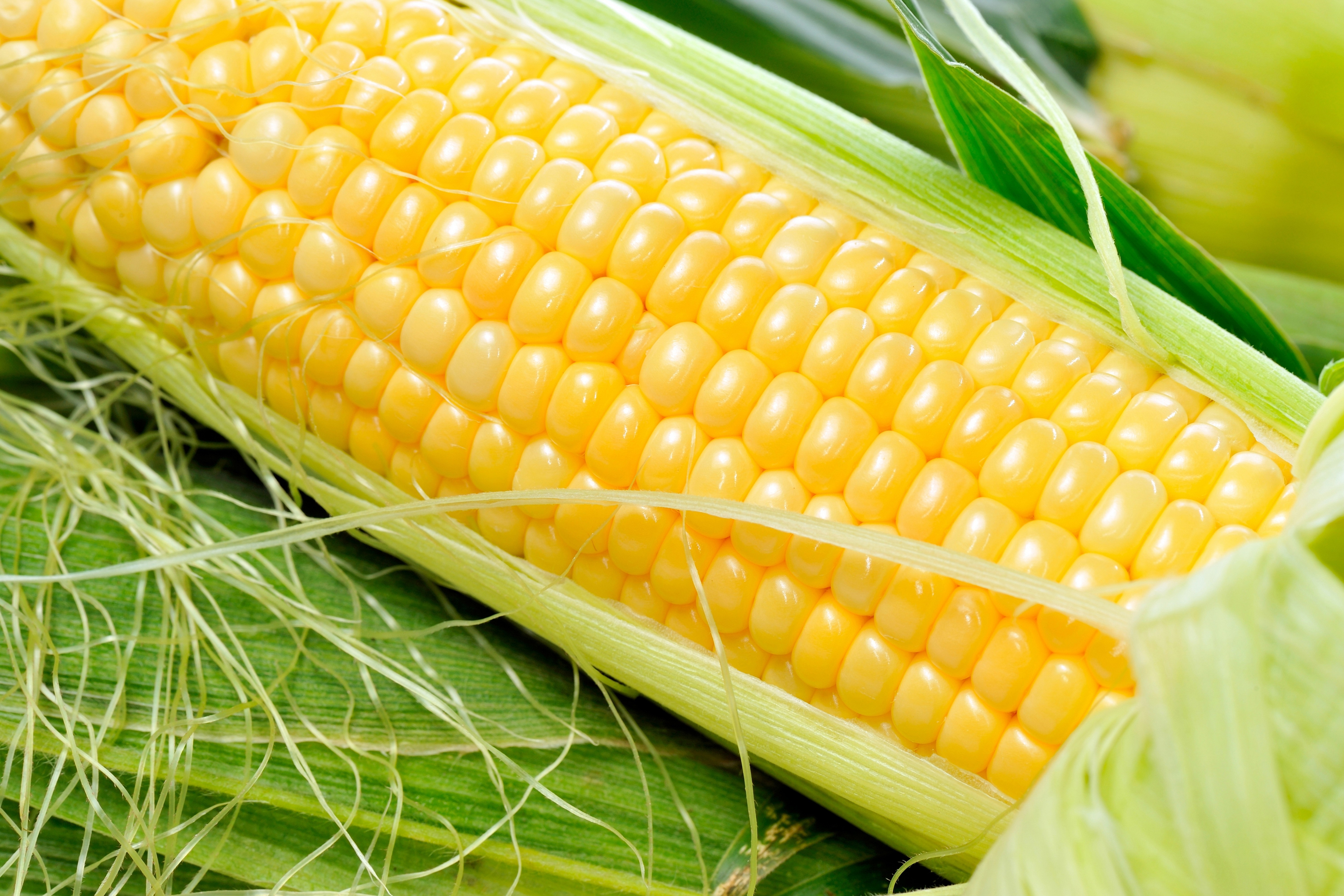 36 Corn HD Wallpapers | Backgrounds - Wallpaper Abyss