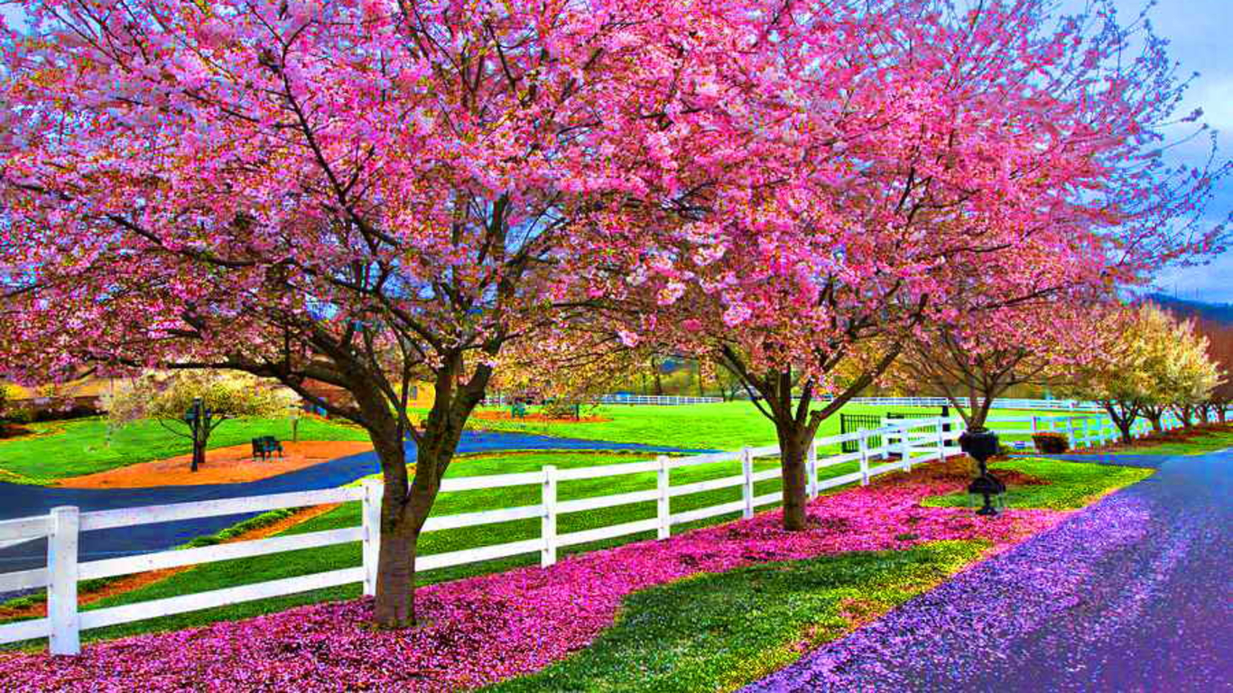 A Beautiful Spring Day Wallpaper and Background Image ...