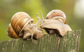 Animal - Snail Wallpapers and Backgrounds ID : 431128