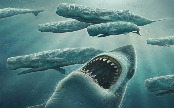 Animal Artistic Shark Whale HD Wallpaper   Background Image