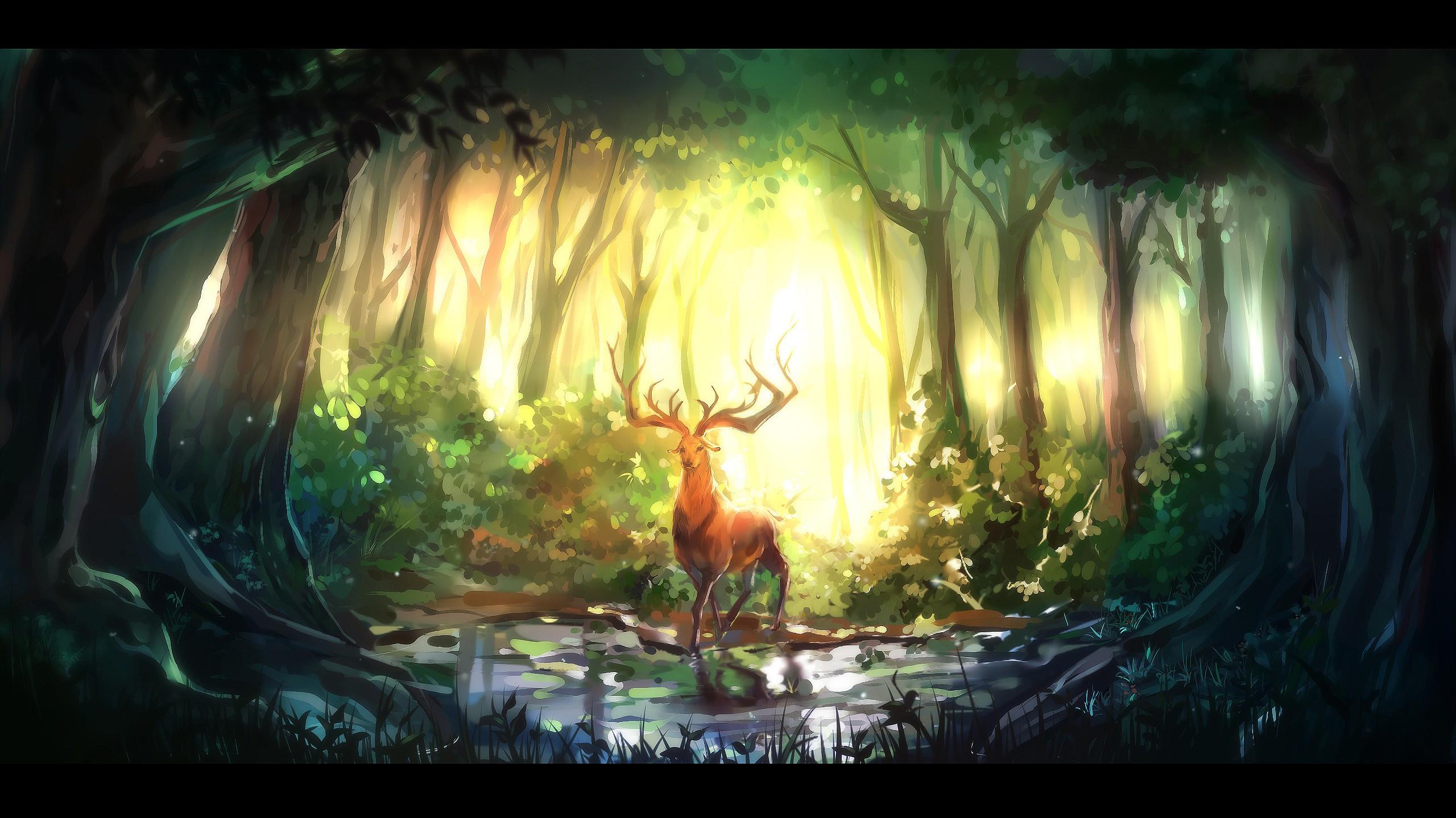 forest computer wallpapers desktop backgrounds